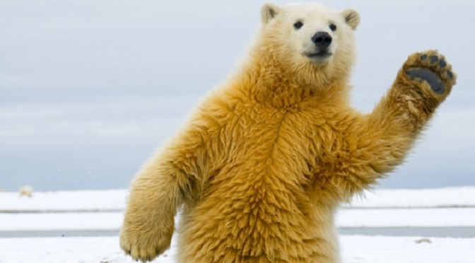 23-11-2015 – Polar Bears, Fights and Glowing Guitars