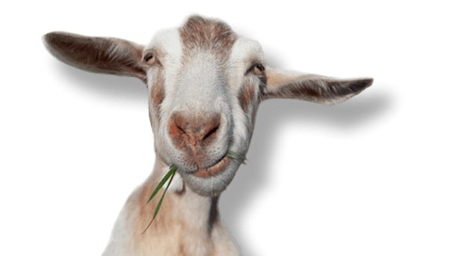 Goatfest