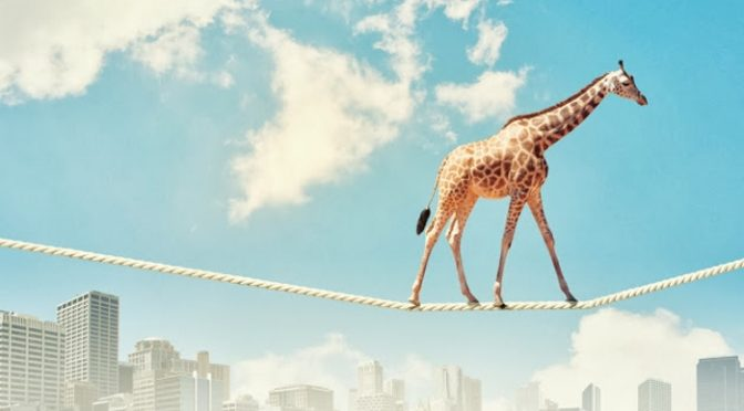 Giraffe on wire