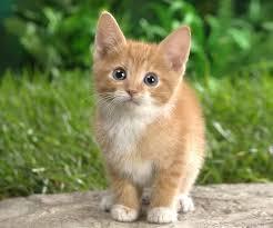 Kitten again