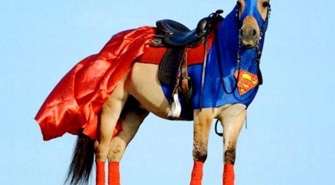 27-11-2017 – Super Horse