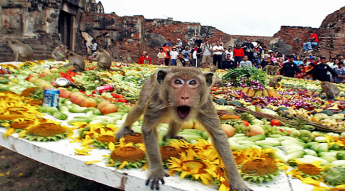 Monkey Buffet