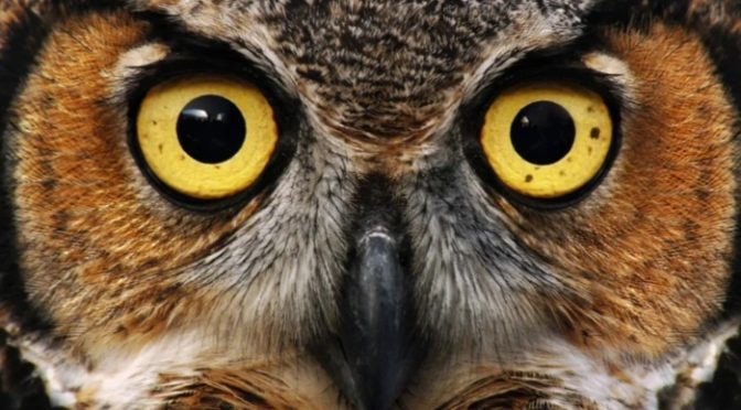 23-04-2019 – Owls and Easter